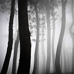 Forest Dance (Hengki Koentjoro) Tags: trees mist silhouette fog dream surreal layers serene trunks tones tranquil