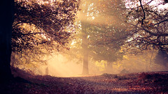 a morning walk (andrew evans.) Tags: lighting morning trees winter light england sun mist nature misty fog fairytale forest sunrise landscape golden countryside kent woods nikon f14 85mm calm sunrays magical d3