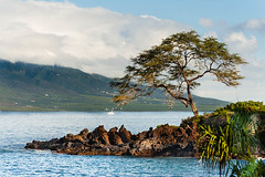 Nice Fishing Spot (Ron Scubadiver's Wild Life) Tags: maui hawaii sea tree landscape mountains nikon 70300vr outdoor