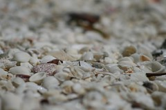 """So Many Shells ! • <a style=""""font-size:0.8em;"""" href=""""http://www.flickr.com/photos/43501506@N07/6614074359/"""" target=""""_blank"""">View on Flickr</a>"""