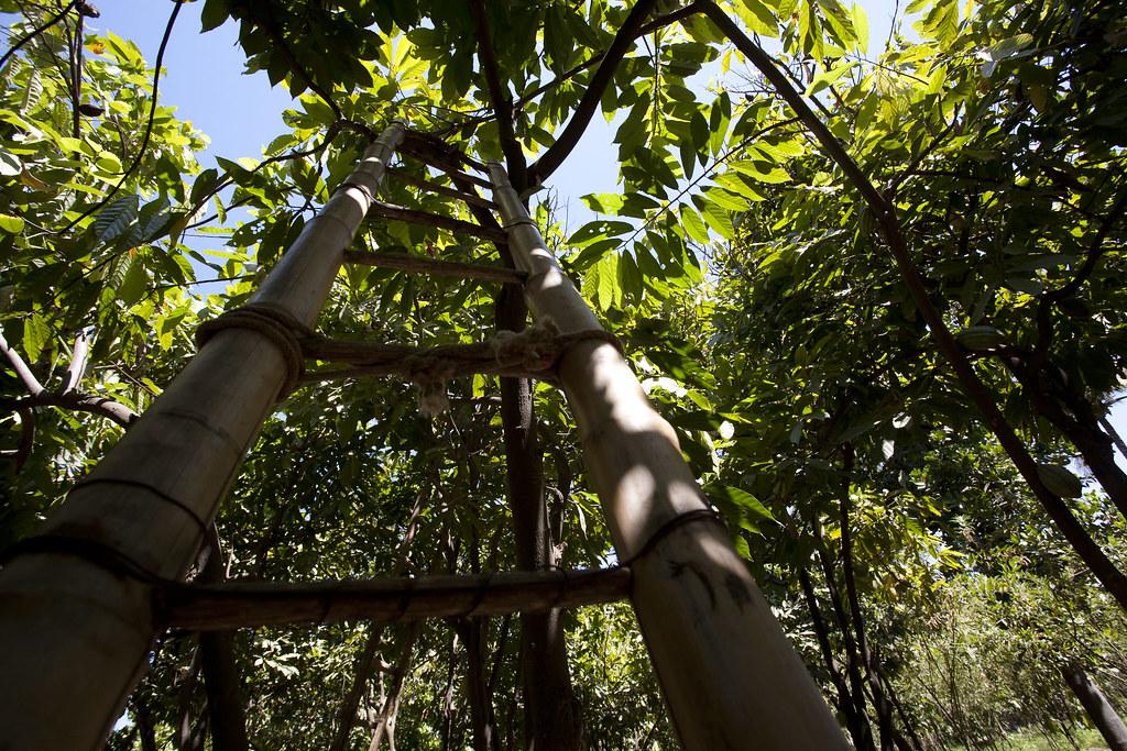 Plantation de la famille Pedro GIMENEZ