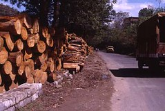 Logs kept on the roadside to be transported later (CSE Environment Photo Gallery) Tags: timber forests himachalpradesh deforestation anilagarwal csepictures