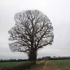 Linus - the happy tree (It's life Jim....) Tags: tree linus mangled hunt msh scavenger stormthorgerson charlesmschulz msh0112 msh011214