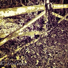 Old fence in Mt. Washington * (kristindye) Tags: trees ohio blackandwhite tree fall nature fence outside outdoors photography blackwhite woods gate vibrant edited cincinnati branches clarity mtwashington normal bnw edit watermark iphone watermarked iphone4 iphoneography instagramapp