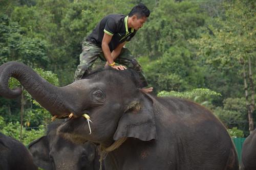 Elephant rider ©  Still ePsiLoN