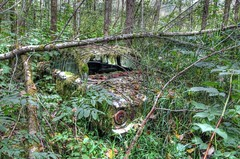 Undercover Falcon (Fairlane221) Tags: auto door ford abandoned car forest sedan four washington moss rust rusty forgotten falcon wa junkyard mossy sixties morton diamondclassphotographer flickrdiamond