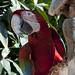 I bei pappagalli dell'Hostal España