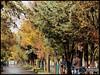 پاييز (Saeid Ghasemi) Tags: autumn beautiful iran پاييز ايران khomein خمين
