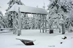 *** (Grzesiek.) Tags: snow tree nature landscape poland natura gry sudety drzewo brama sudeten krajobraz snieg grysowie dolnylsk wielkasowa