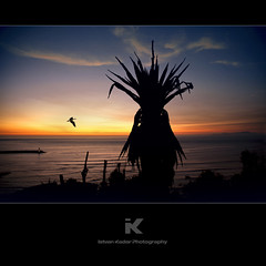 Century Plant by Nightfall (fesign) Tags: ocean sunset sea cactus sky plant seascape bird peru silhouette evening cross lima barranco nightfall centuryplant