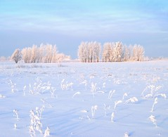 Snowy view (Tobi_2008) Tags: schnee winter sky snow tree nature field germany landscape deutschland saxony natur feld himmel ciel sachsen landschaft allemagne arbre baum germania acker bestcapturesaoi mygearandme musictomyeyeslevel1