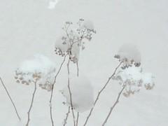 ricami nella neve (Explored #87) (solonanda non c' pi) Tags: white snow neve inverno bianco wintwr abigfave platinumheartaward bestcapturesaoi artistoftheyearlevel3 artistoftheyearlevel2 musictomyeyeslevel1