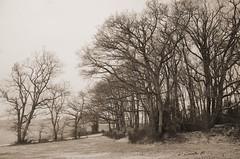 Winter (Tinina67) Tags: old trees winter bw house snow france tree history home sepia forest vintage oak frost au monotone foliage tina marron challenge antik odc gers seissan tinina67