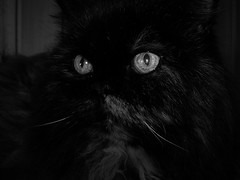 Gatti (Enchanted Loom) Tags: gatti lilli