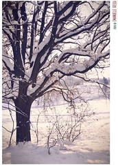 carico (loudechoes) Tags: italy snow ice landscape natura hills emilia neve bologna freddo paesaggio collina ghiaccio romagna