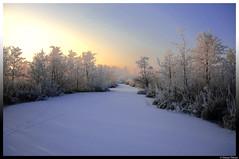 Zouwe Boezem 2 (danny..) Tags: winter snow holland ice nature canon sneeuw nederland natuur nl alblasserwaard 2012 ijs zuidholland groenehart ameide vijfherenlanden