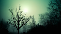 Future Blind (Sky Noir) Tags: morning trees sun silhouette fog mystery landscape photography blind atmosphere vision future mysterious shroud dim dreamlike limited atmospheric skynoir