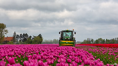 The beginning of the end of the beautiful colors (BraCom (Bram)) Tags: trees tractor holland clouds canon landscape spring bomen tulips farm widescreen nederland thenetherlands machine wolken agriculture 169 lente landschap endofseason tulpen boerderij zuidholland goereeoverflakkee trekker sommelsdijk landbouw southholland canonef24105mm eindeseizoen bracom canoneos5dmkiii