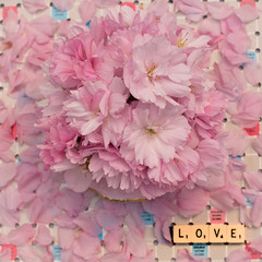 LOVE and cherry blossom (photoart33) Tags: pink stilllife vintage square text scrabble