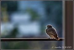 Observation (Aurélie_D) Tags: 55200mm ourplanet flickrsexplore bird oiseau nikond3000 nikonfrance nikonpassion france animal 20faves 20favs 300views