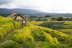 sawah 2 (Fakhri Anindita) Tags: bali nature field indonesia landscape photography nikon farm ubud sawah jatiluwih