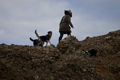 4mai_Thorbjorn_034 (Stefn H. Kristinsson) Tags: dog mountain dogs iceland spring hiking may ma vor hundur sland ganga fjallganga tamron2875mm grindavk hundar grindavik orbjrn nikond800 thornbjorn orbjarnarfell