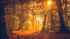 Fairytale (Augmented Reality Images (Getty Contributor)) Tags: autumn trees light shadow fall leaves sunshine yellow forest canon woodland scotland perthshire adobe editing lightroom dunning
