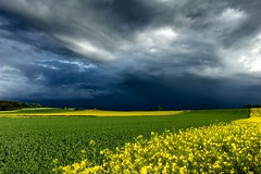 Dark Horizon (AHO66) Tags: storm tree clouds germany landscape deutschland cloudy feld felder wolken landschaft raps baum wolkig sturm rapsfeld niedersachsen barsinghausen barrigsen