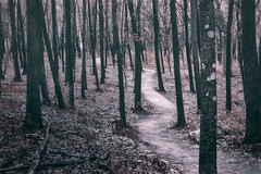Ice Age Trail Near Lapham Peak (ScottNorrisPhoto) Tags: trees wisconsin forest way landscape outdoors photography moody hiking path walk overcast hike explore muted iceagetrail dnr kettlemorainestateforest 365project laphampeakunit scottnorrisphotography