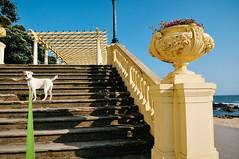 Ice the Dog at Prgola da Foz (Gail at Large + Image Legacy) Tags: portugal porto pergola 2016 fozdodouro gailatlargecom prgoladafoz icethedog
