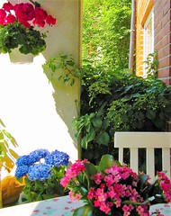Terassilla (totinkoti) Tags: koti terassi kukat