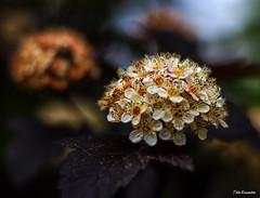 flores (ton21lakers) Tags: naturaleza flores macro canon asturias botanico gijon too escandon