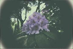 Min tolkning (Frukostklubben) Tags: cameraobscura fotosondag fs1600605