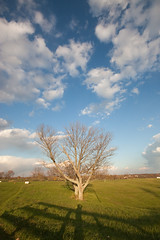 Happy Tree (O.Connell.) Tags: trees shadow color tree fall clouds digital canon fence photography driving kentucky ky sigma wideangle bluesky photograph somewhere cloudporn privateproperty greengrass sigma1020mmf456 photographerinphoto canon450d canonrebelxsi sigmadchsm sigma50th