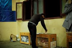 DSC_4414.jpg (Mosa'aberising) Tags: egypt parliament cast revolution boxes vote elections voting ballot queues ballots asr zamalek egyptians aini parliamentary jan25