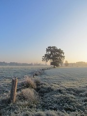 winter in november (Foto Dominic) Tags: morning light cold tree field landscape frozen bomen natuur explore veld ochtend landschap koud autofocus wow1 wow2 flickrbronzeaward flickrsilveraward naturespotofgold universalelite visionaryartsgallery doubleniceshot tripleniceshot mygearandme mygearandmepremium mygearandmebronze mygearandmesilver mygearandmegold mygearandmeplatinum mygearandmediamond ringexcellence fotodominic