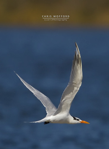Tern Flight