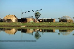 A lovely small hut in a small island (Shahriar Xplores...) Tags: tanguar haor sunamganj tanguarhaorsunamganj canon 550d t2i eos eoscanon550d 55mm landscape village water sky blue reflection hut house green grass light wide waterscapes landscapes gettyimage requesttolicense gettyimages shahriarphotography bangladesh aisa dhaka sell image