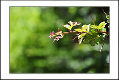 New life #4 [explored] (e.nhan) Tags: life new light plant green art nature leaves closeup garden leaf colours shadows dof bokeh backlighting enhan