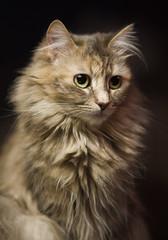 Thetra (crsan) Tags: portrait cat bestofcats