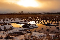 Rice fields at dusk (jyunbo) Tags: snow japan evening aomori ricefields gettyimagesjapanq4