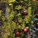 360_Trees_2011_142