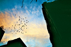 * (Sonunamela) Tags: new york sunset sky film birds animals buildings flying nikon pretty manhattan side east lower migration em