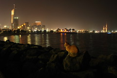 Curiosity killed the cat (Dr Tarek) Tags: tower night cat coast shot towers kuwait seafront soe drtarek yahoo:yourpictures=waterv2