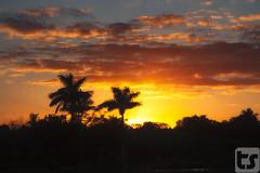 A Blaze Of Color (Theodore A. Stark) Tags: winter tree bird birds silhouette clouds canon outdoors florida wildlife palmtree everglades vegetation evergladesnationalpark vulture subtropical avian theodore 5dmarkii theodoreastark tedstark tstarkcom flgps