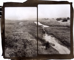 Limantour marsh (efo) Tags: bw diptych marincounty marsh pointreyes ptreyes limantour digitalnegative palladiotype