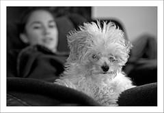 El caniche (miguelangelortega) Tags: bw byn niña perro desenfoque doméstica ltytr2 ltytr1 ltytr3 ltytr4 ltytr5 ltytr6 blinkagain