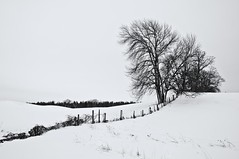 Converging Lines (Light Collector) Tags: trees winter snow ontario canada fence hill leadinglines simcoecounty clearviewtownship ourdailychallenge