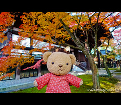 ( ()) Tags: japan maple kyoto      lx3