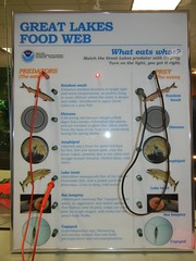 Great Lakes Food Web Quiz Board